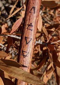 Simboli Alchemici Elementi Naturali