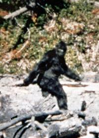 Yeti - Bigfoot