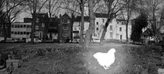 Il fantasma del pollo di Pond Square