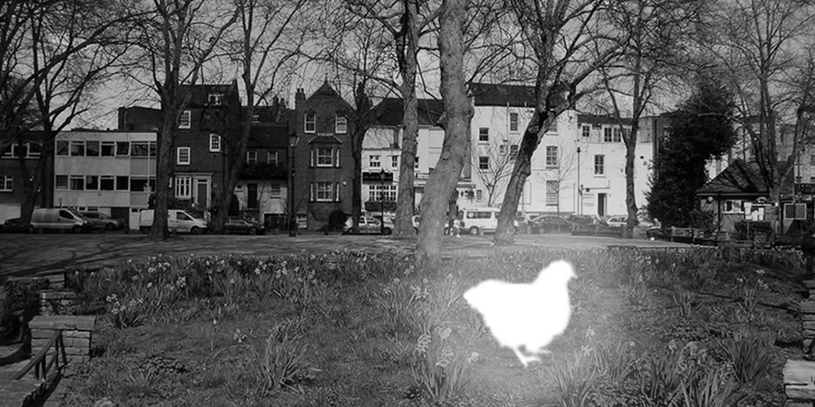 Il fantasma del pollo di Pond Square