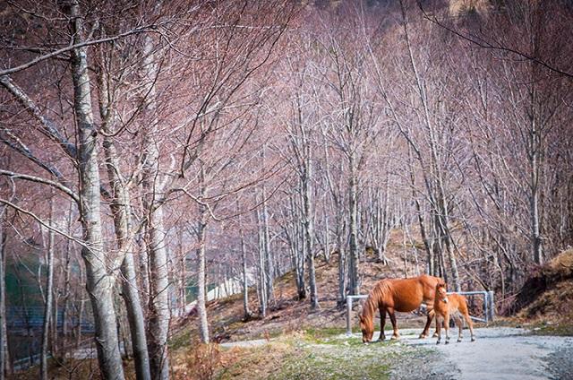 cavalli-selvaggi-aveto