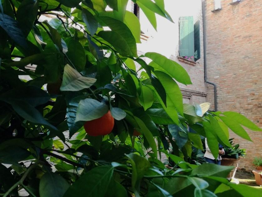 scoprire giardini privati a Ferrara