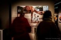 Steve-McCarry-Animals-Mudec-Photo-Milano-2018-©-Renato-Corpaci-9