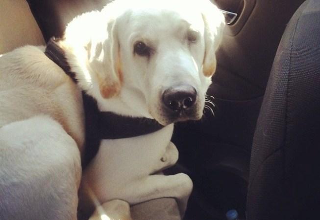 Dove andare in vacanza con il cane: l'austria