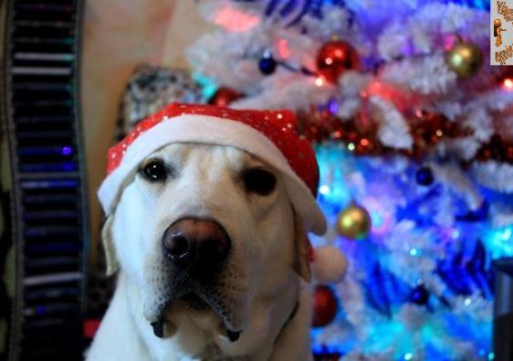 Buon Natale Zaino in spalla