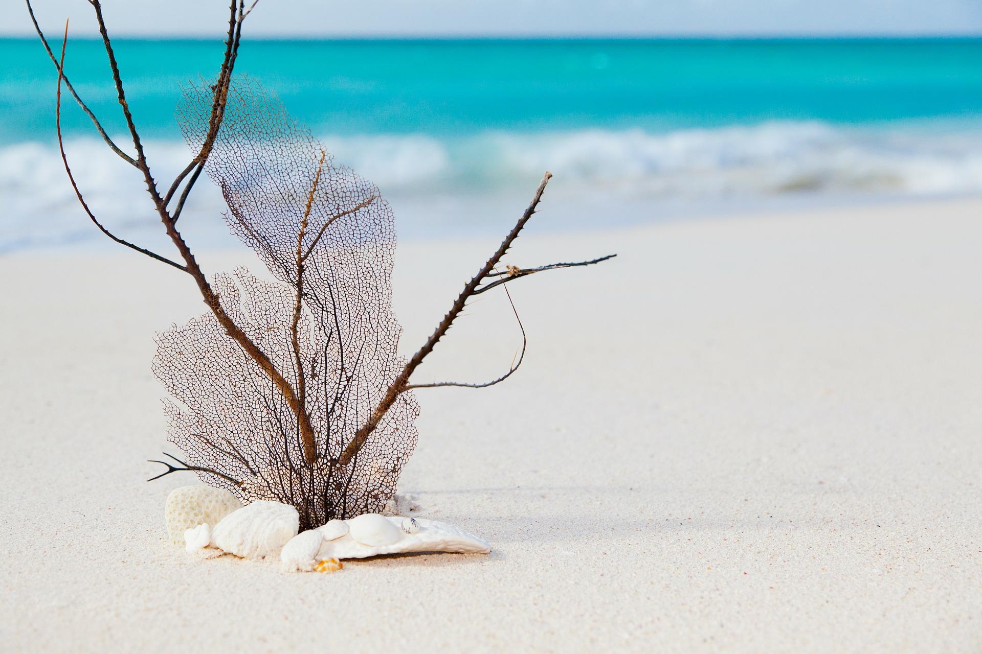 beach-84566_1920