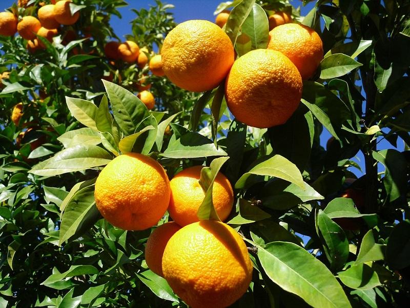 vivere a siviglia arance