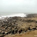 Colonia de focas