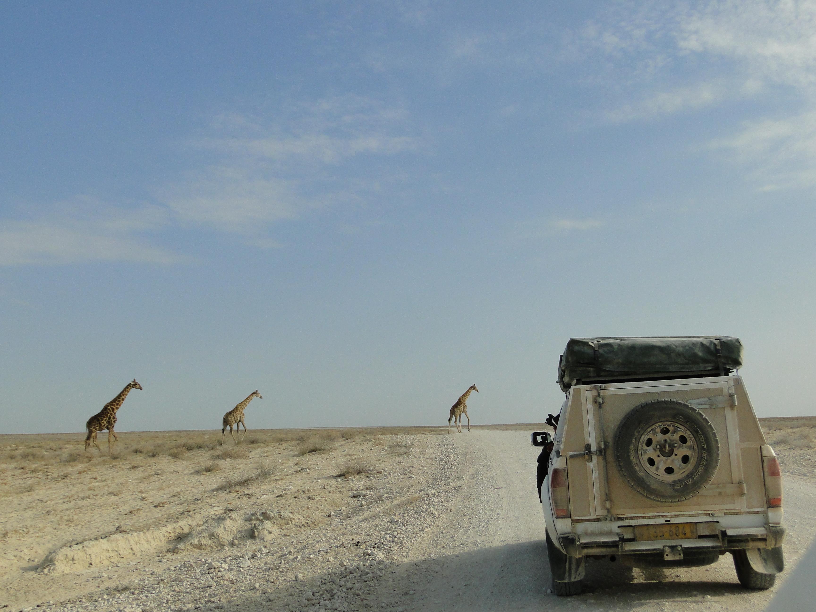 Jirafas en Etosha Self Drive Safari