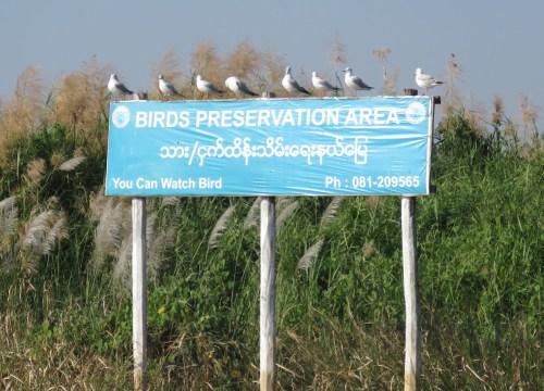 Área de conservación de aves en el Lago Inle