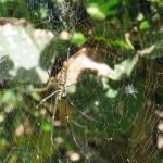 Una zona con muchos insectos, especialmente arañas