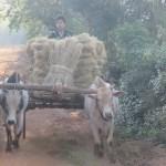 Desde temprano los campesinos salen a trabajar