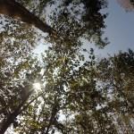 Algunos de los bosques que atravesamos