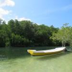 Una parte de la isla está ocupada por el manglar