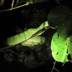 La primera serpiente que vimos