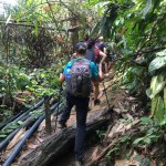 El camino para ver la Rafflesia, entre barro y tubos