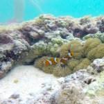 """Los """"nemo"""" en su pequeño coral"""