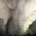 Millones de murciélagos habitan en este ecosistema