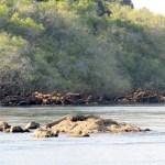 Cocodrilos en el río Kafue