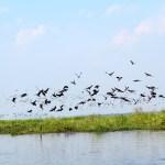 Al pasar con el bote cientos de pájaros elevaban su vueloAl pasar con el bote cientos de pájaros elevaban su vuelo