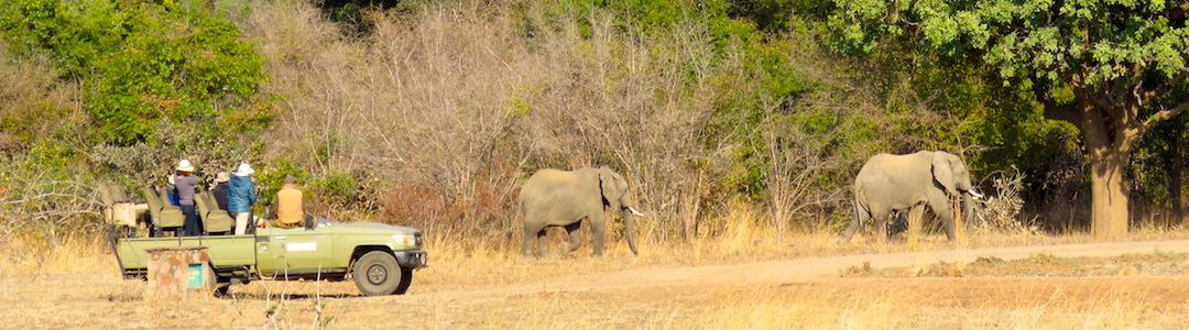 Safari South Luangwa Zambia