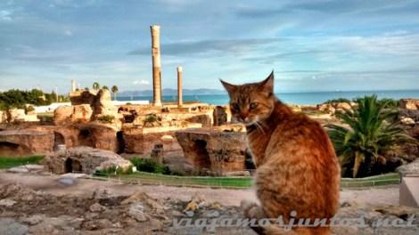 Gato y Cártago, Túnez