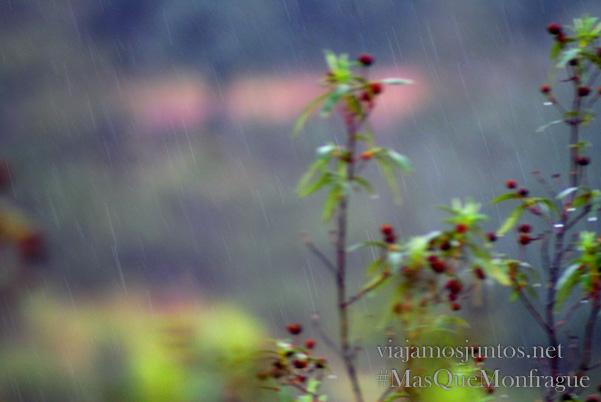 Lluvia en la dehesa, Parque Nacional de Monfragüe y la Reserva de la Biosfera de Monfragüe, Extremadura