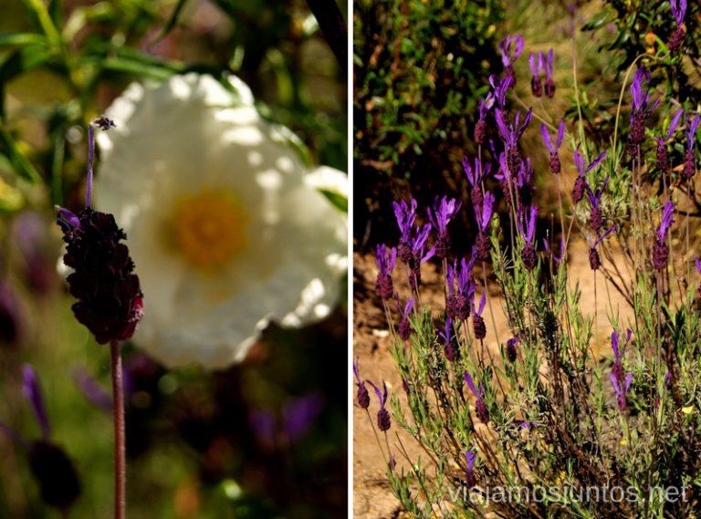 La Pedriza en primavera Parque de la Cuenca Alta del Manzanares y Manzanares el Real, Madrid