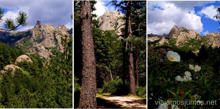 Mi querida La Pedriza Parque de la Cuenca Alta del Manzanares y Manzanares el Real, Madrid