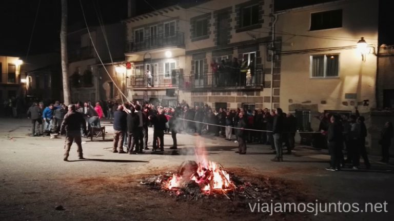 Plantando el chopo Cucurrumachos de Navalosa, Ávila Mascaradas Abulenses en Gredos Carnavales