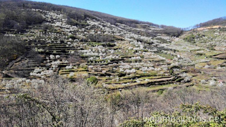 Vistas al Valle de la Vera Ver cerezos en flor en el Valle del Jerte Consejos prácticos, turcos, rincones secretos