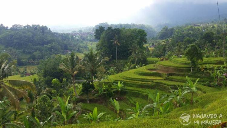 Tegallalang-rice-terraces-02