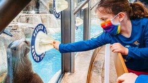 Sea Lion Point