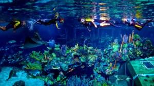 Seas Aqua Tour