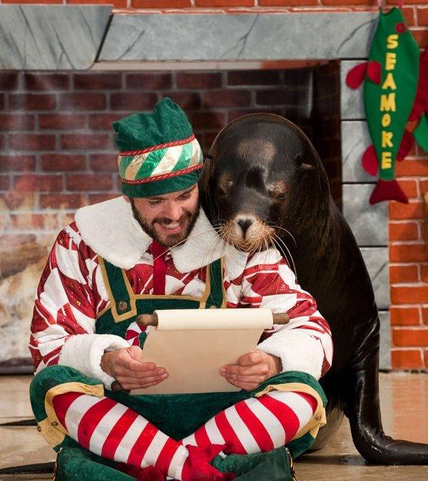 Celebração de Natal do SeaWorld tem novo show com personagens da Sesame Street