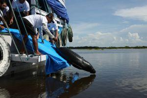 SeaWorld & Busch Gardens Conservation Fund celebra novos projetos apoiados no Brasil