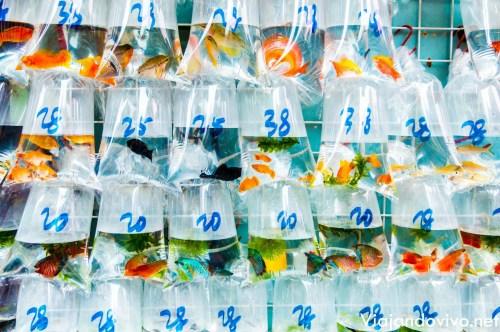 Peces de todos los colores en el Golden Fish Market de Hong Kong