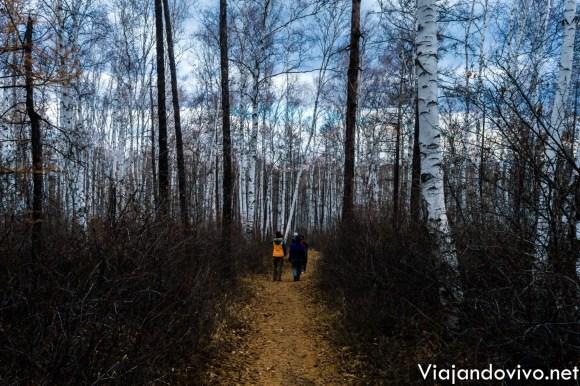 Caminando por el bosque de Chita en Rusia