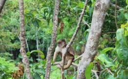 floresta-amazonica-3