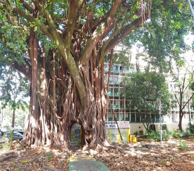 Árvore dos desejos na 108 sul em Brasília