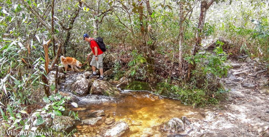 Cachorro da raça Akita fazendo trilha na Chapada dos Veadeiros