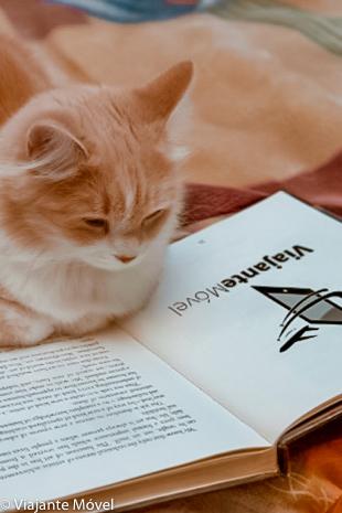 Gato lendo Livros de Viagem Gratuitos