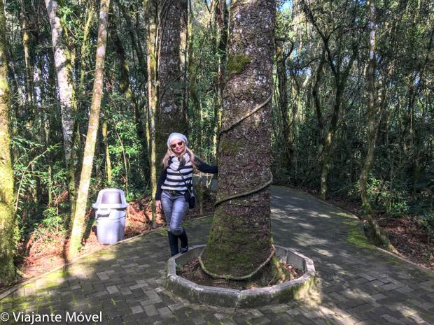 O que fazer em Gramado e Canela: Quatis no Parques da Serra