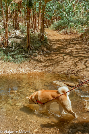 Cachoeira do Ramalho um passeio com nosso cachorro em Minas Gerais