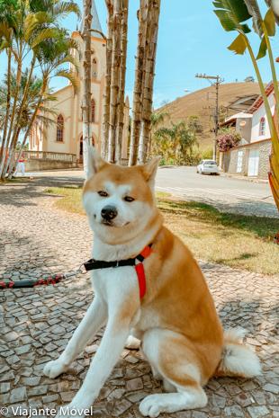 Viagem de carro com cachorro pelas estradas de Minas Gerais