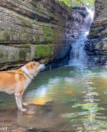 Três Marias Pet Friendly - um passeio com nosso Akita