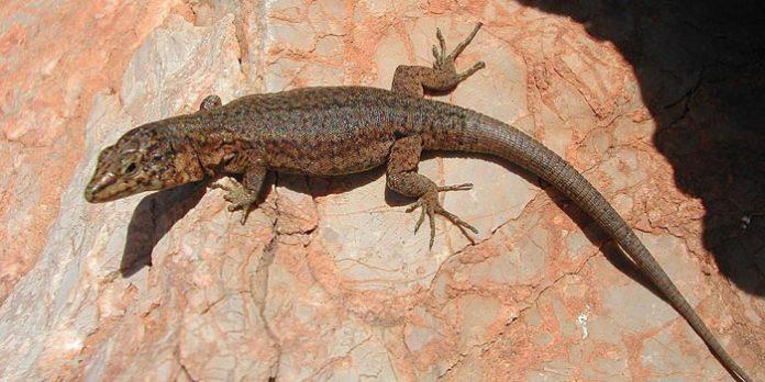 Fauna en Menorca