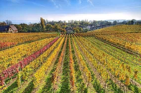 La Ruta del Vino Ribera del Duero eleva el termino Enoturismo