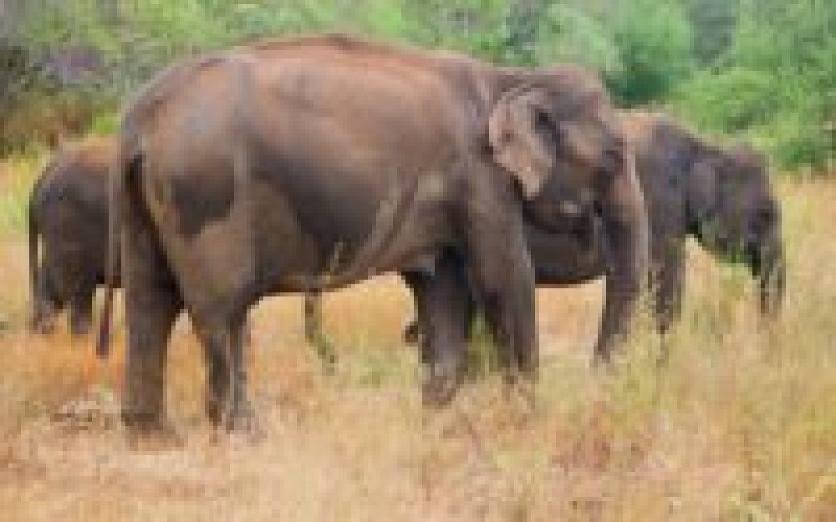 Elefantes en Udawalawe