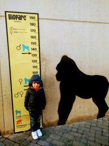 BIoparc, Bioparc Valencia: zooinmersión con niños, Viajar despeina
